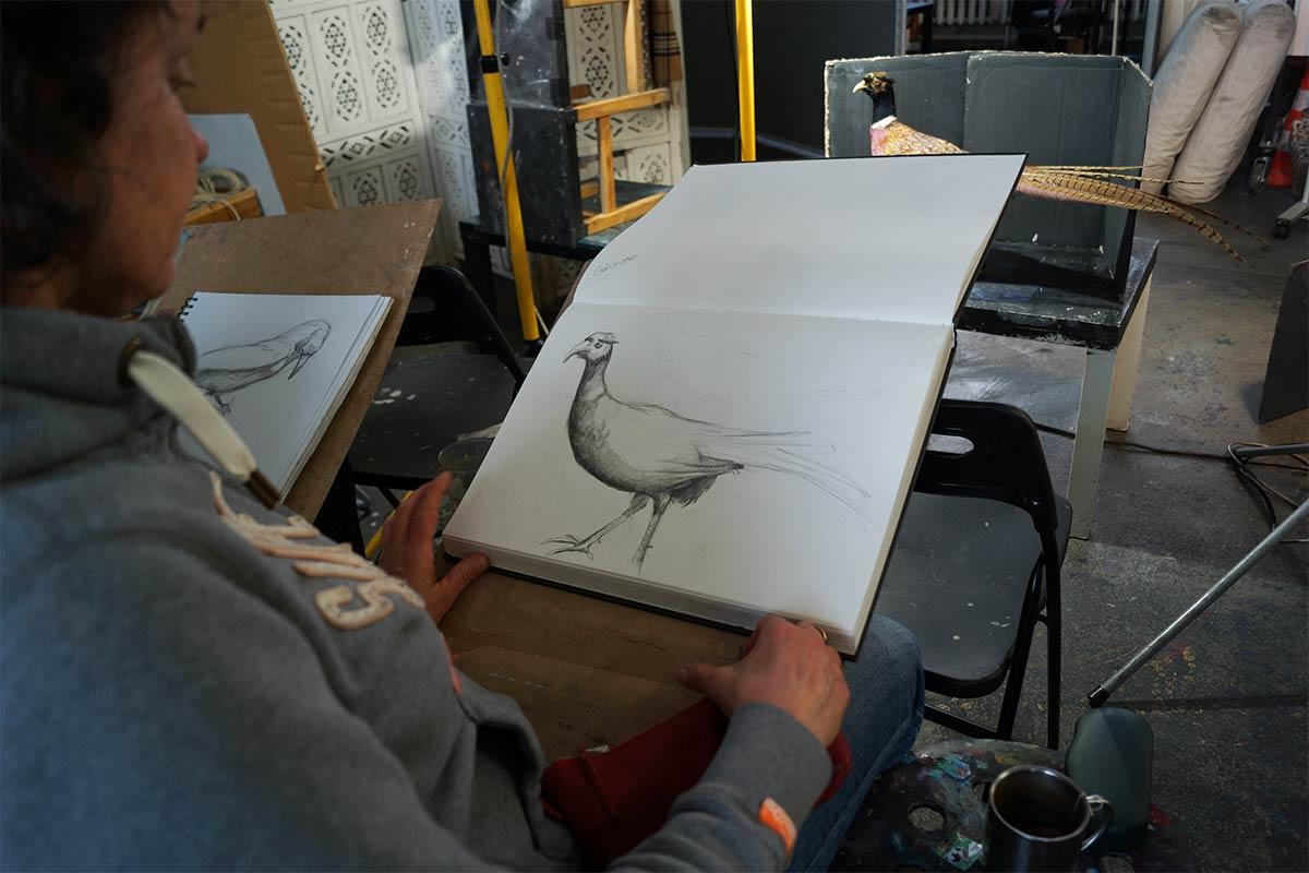 Bleistiftzeichnung eines ausgestopften Fasans